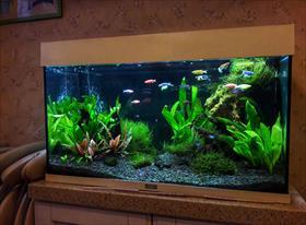 Пресноводные аквариумы   С живыми растениями