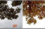 Примеры обработки изображений