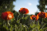 Цветы, природа.
