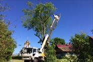 удаляю деревья