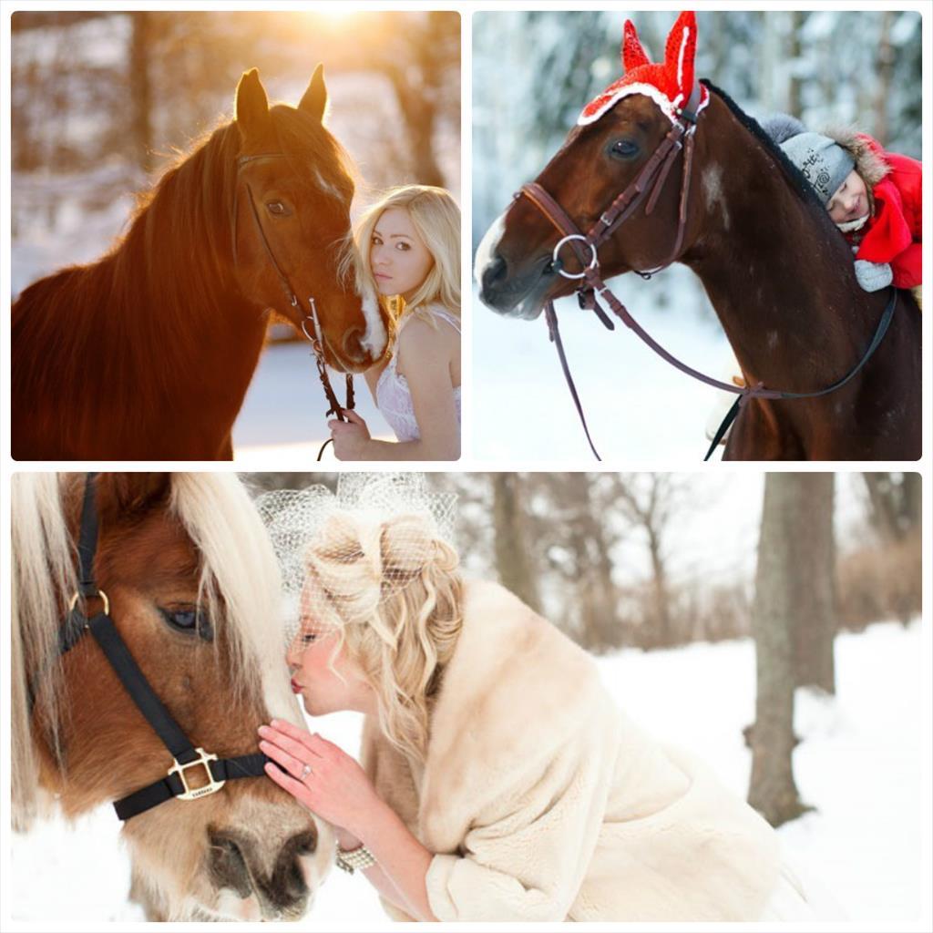 фотосессия с лошадьми фото зимой