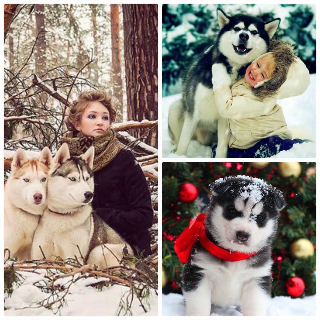 фотосессия зимой с собаками